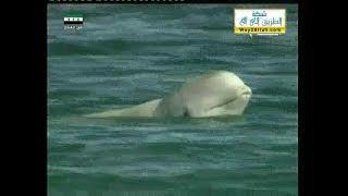 ( الحوت الأبيض الجميل ) : : المجد الطبيعية