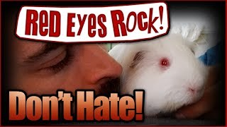 Guinea Pigs with Red Eyes Rock!