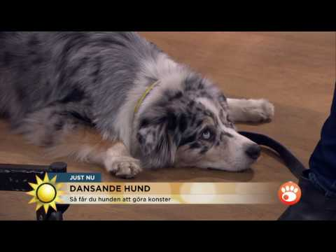 Nina Roegner och den dansande hunden Moster - Nyhetsmorgon (TV4)