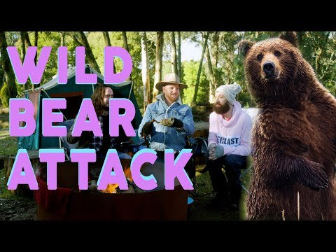 Xxx Mp4 Wild Bear Attack 3gp Sex