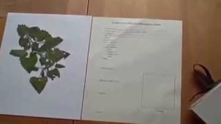 How to Make an Herb Press and an Herbarium, Part 2
