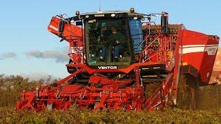 Grimme Ventor 4150 Big Potato Harvester Working Hard in The Field | Potato Season 18' | DK Agri