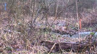 Tributary Stream Bank, 305 Country Way