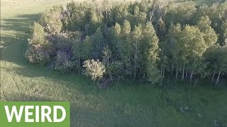 Did this drone cam just capture a Bigfoot sighting?!