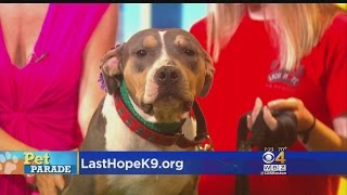 Pet Parade: Last Hope K9 In Boston