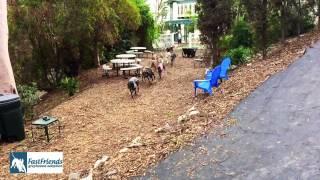 FastFriends Greyhound Adoption of Ca Inc