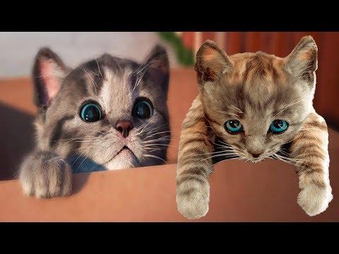Play Fun Pet Care Kids Game Little Kitten My Favorite Cat