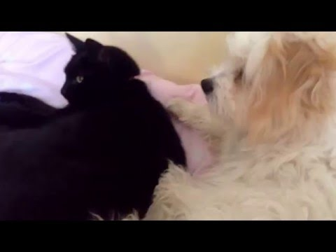 Cat and dog so cute xxxx