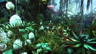 Prog Dark Forest Psychedelic Set