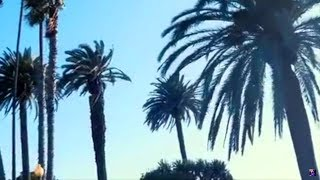 Lucid - Malibu (official video)