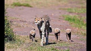 مقدمة : الحياة البرية Wildlife