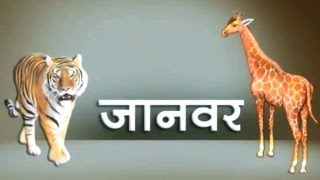 Children's Favorite Animals | Learning Hindi Animal Names | HD