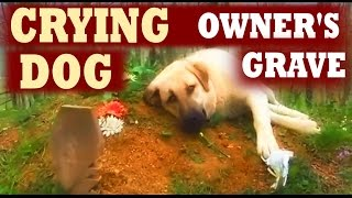 Dog Cries at His Owner's Grave Every Day