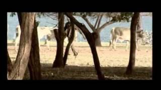 Muvi TV - Van Gaurds
