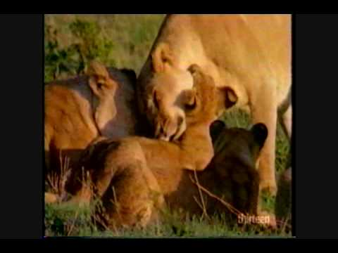 Out in Nature: Homosexual Behavior in the Animal Kingdom (3 of 6)