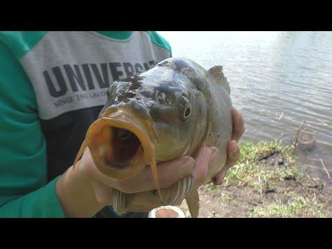 ловля рыбы в германии видео