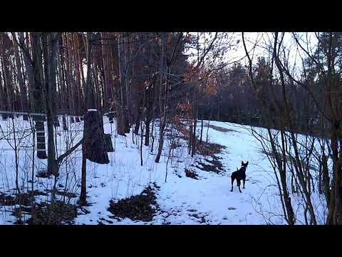 Valencia Merble the Dog and 6 Deer at Functional Rustic