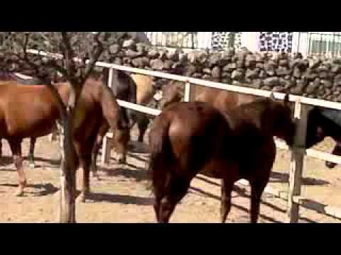 Rancho San Miguel CRIADERO DE CABALLOS JP