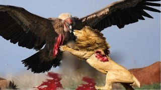 Live: TOP 100 The most Amazing Attacks Of Wild Animals Eagle,lion,Crocodile, buffalo, elephant..Etc