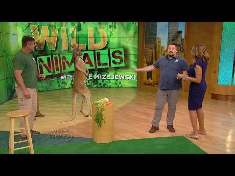 Wild Animals with Dave Mizejewski