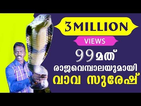 Vava Suresh Caught his 99TH King Cobra | SNAKE MASTER EP 206 24-11-2016 | Kaumudy TV