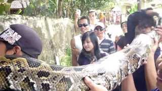 World's Biggest Snake 2015 world's biggest snake found alive not Dead NEW 2015 Video Giant Ever