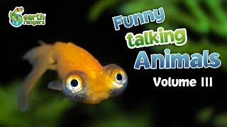 Funny Talking Animals: Episode 3