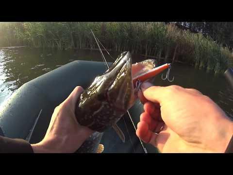бесплатное видео как ловить щуку