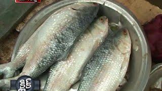 Pulasa Fish Speciality