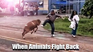 When Animals Fight Back - 🐐 🐂