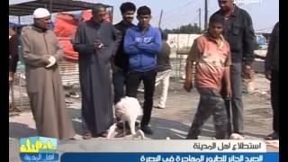 الصيد الجائر للطيور المهاجرة في البصرة - اهل المدينة ليوم 3-3-2014