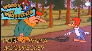 Woody Woodpecker in How to Trap a Woodpecker | A Walter Lantz Production