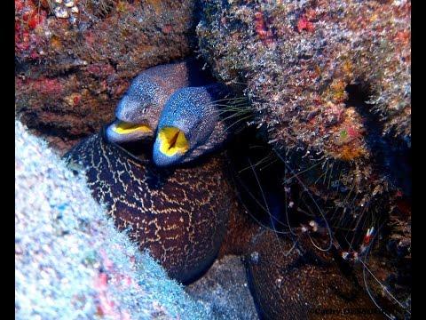 Plongée Cap Vert - PONTINHA Sal - CABO VERDE Diving