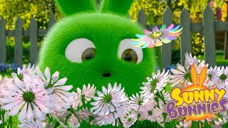 Cartoons for Children | Sunny Bunnies SUNNY BUNNIES FLOWER PICKING | Funny Cartoons For Children