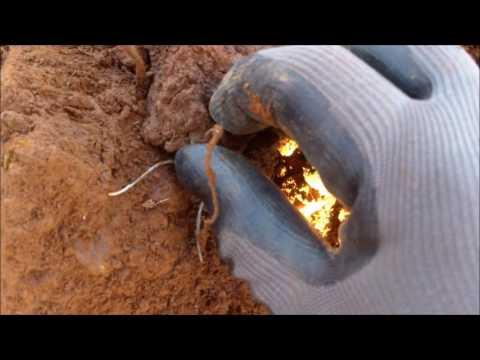 Xxx Mp4 Diggin In Virginia XXXV Deep Treasure 3gp Sex