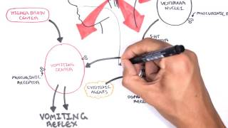 Physiology of Vomiting - Vomiting reflex (NEW)