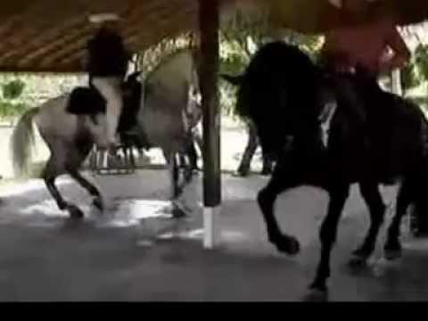 grupo laberinto caballos famosos mix vol 2 dj gavilan 2012