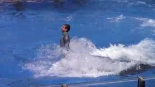 Presentación de delfines en Seaworld
