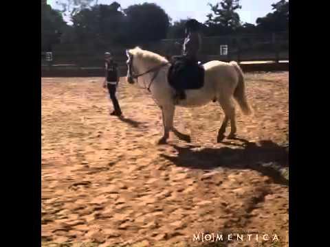 Horse xxx