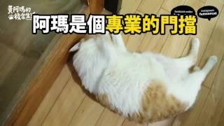 黃阿瑪的後宮生活-阿瑪門擋 Lazy cat