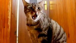 Sad Cat Misses His Owner (Hidden Camera)