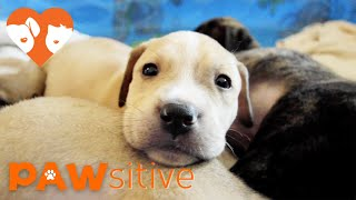 10 Puppies Orphaned After Losing Mom Are Hand-Raised by Rescuers