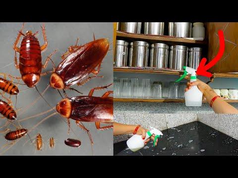 छिपे हुएँ कॉकरोच भी मार देगा ये ज़बरदस्त नुस्खा।अब दोबारा कभी कॉकरोच नहीं होंगे।Get Rid of Cockroach