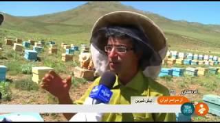 Iran Honey production, Badr & Parishan hills, Kurdistan توليد عسل بلنديهاي بدر و پريشان كردستان