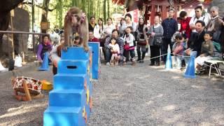 日本淺草寺猴戲