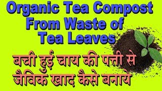 Organic Tea Compost From Waste Of Tea Leaves