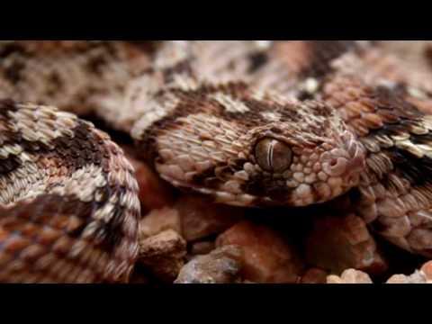 Xxx Mp4 10 Worlds Most Venomous Snakes 3gp Sex