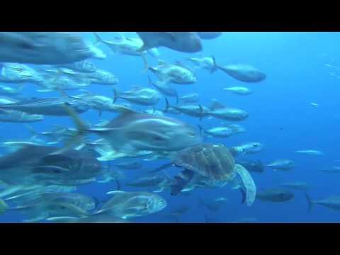 Voyage sous les Mers 3D Film Annonce