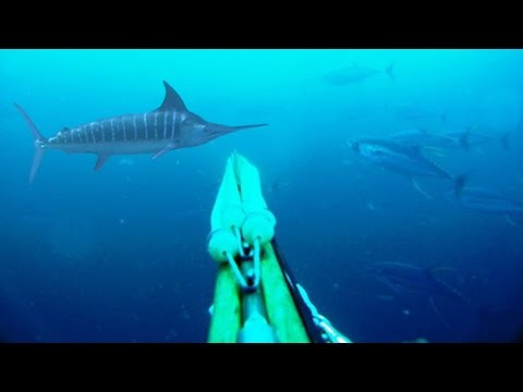 Blue Water Spearfishing Pesca Sub com Diego Santiago