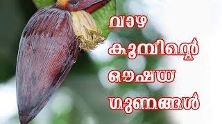 വാഴ കൂമ്പിന്റെ ഔഷധ ഗുണങ്ങൾ /Malayalam Health Tips